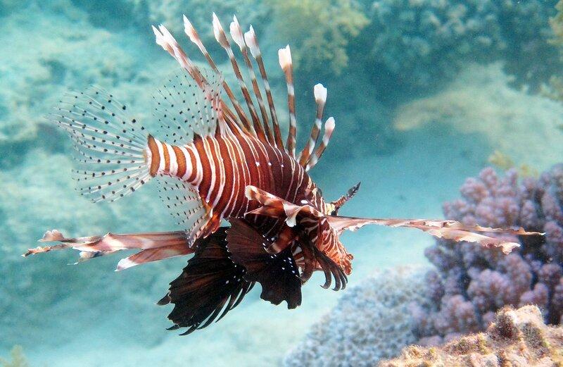 Пролетая над кораллами