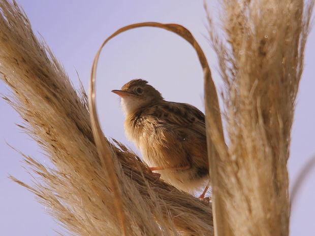 Другие птицы Хоакима Оливейры (Joaquim Oliveira), 31 фото