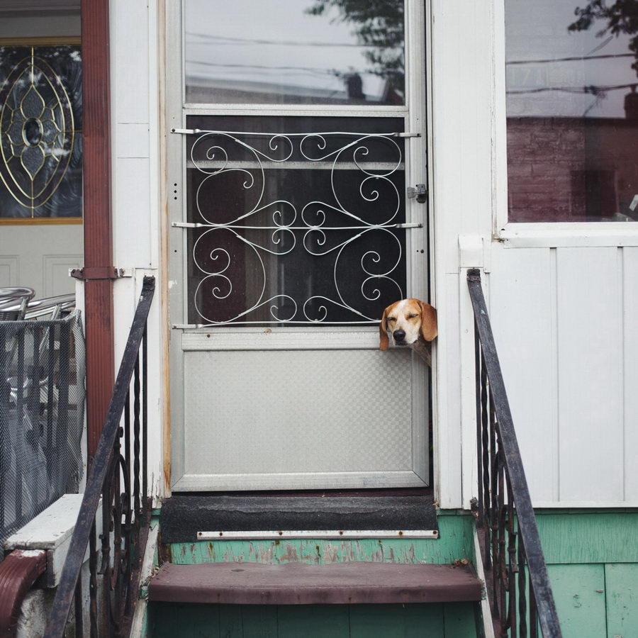 Nelepaya-sobaka-Maddie-ot-Theron-Humphrey-24-foto