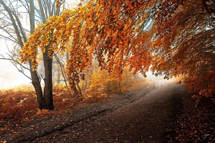 Осень изнутри