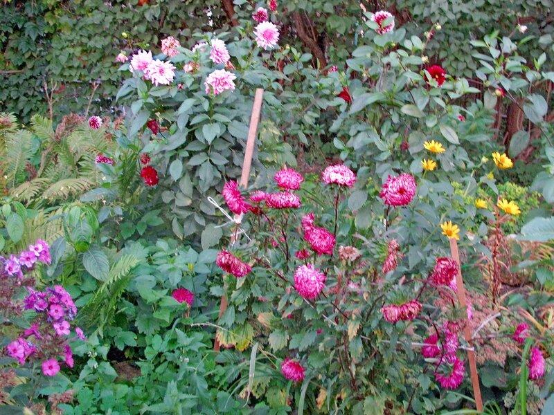 Осенние брызги, убираем райский садик