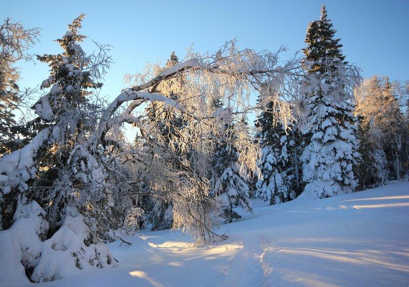 Снежный лес у Откликного
