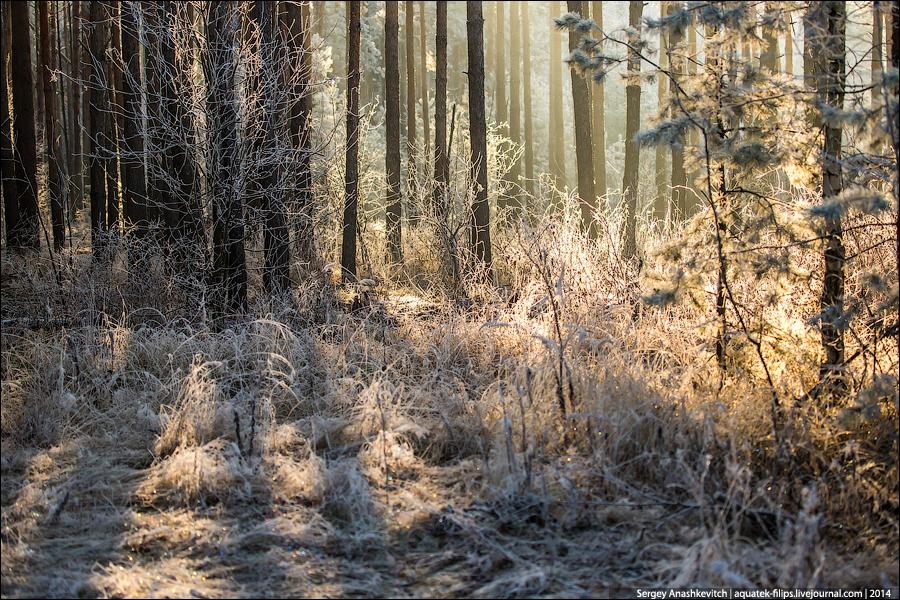 Волшебство морозного утра