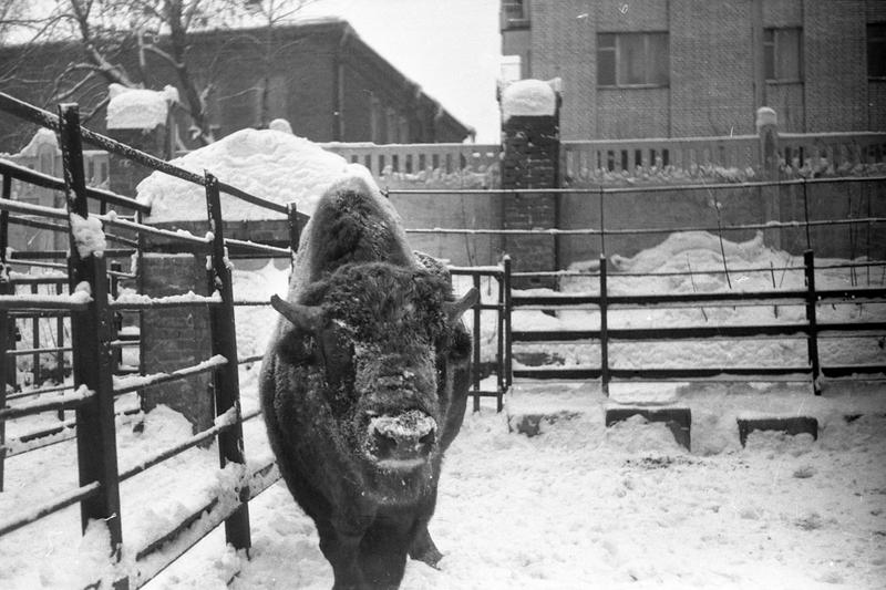 397450 Зоопарк Симоновский А.О. кон. 1960-х гг..jpg