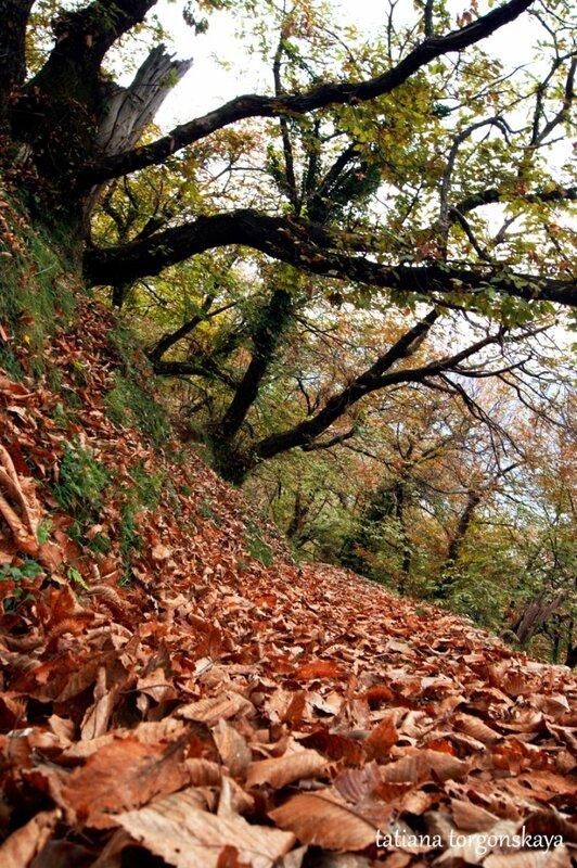 Каштановый лес