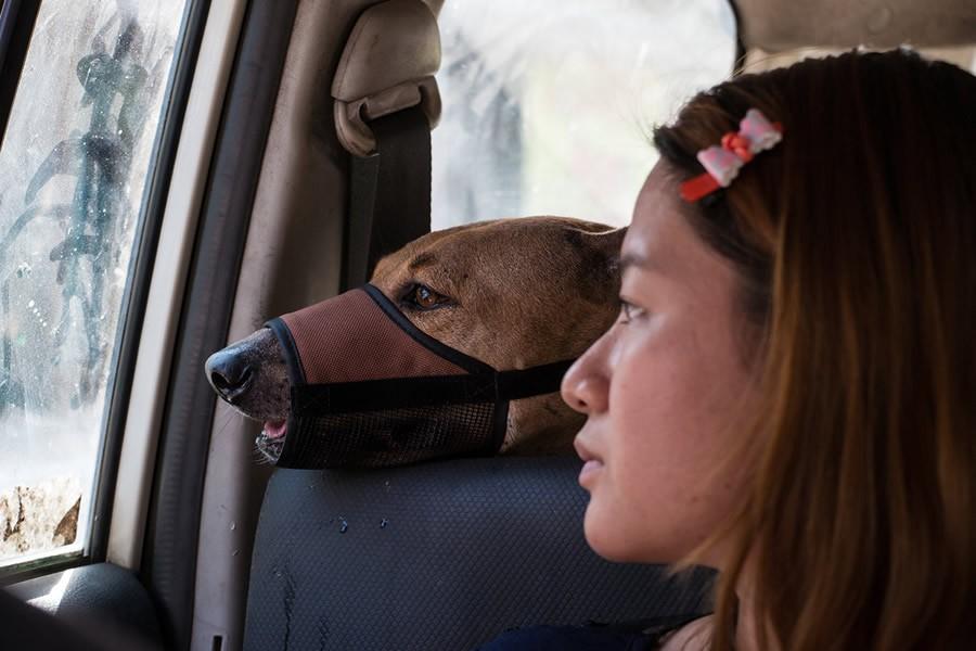 10. «Некоторые считают, что моя работа бесполезна, что собак все равно убьют. Но я чувствую, что это