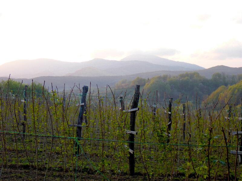 выращивание малины в сербии