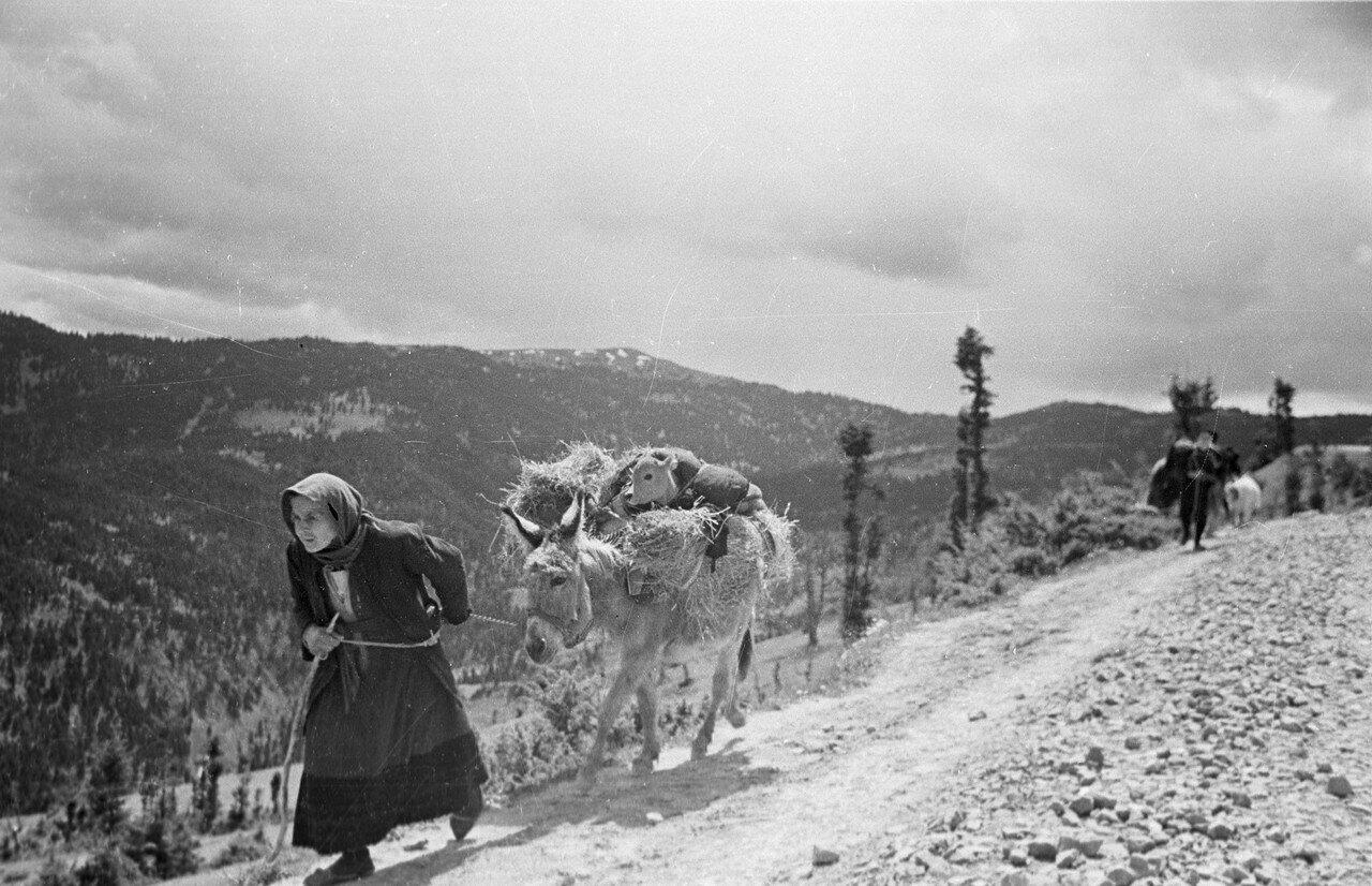 1948. Пожилая женщина перевозит свой скарб на осле из зоны боевых действий
