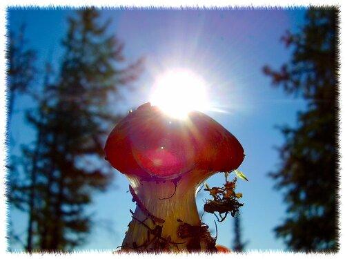 BaranovaGalina — «Солнечный гриб» на Яндекс.Фотках
