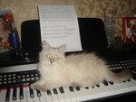 Музыкальная котёнка