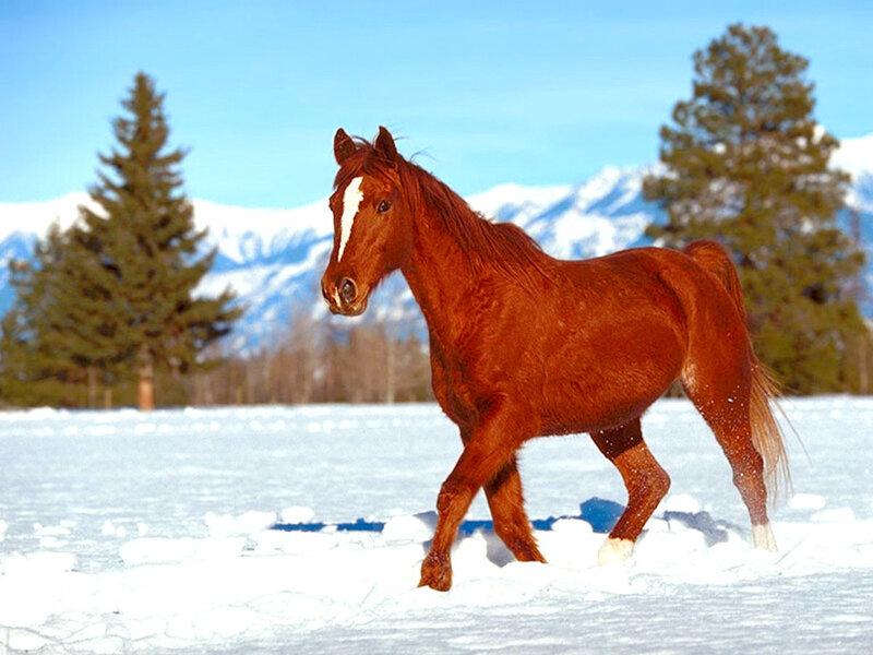 """Гамма, 60 цветов. конь.  200x150 крестов.  Портал  """"Вышивка крестом """".  1. MARI. новые схемы. лошадь."""