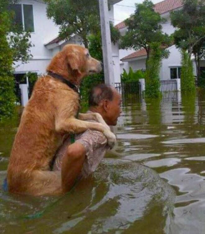 Как люди спасают животных 0 12cfe9 c19d385a orig