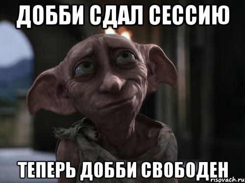 dobbi_54052459_orig_.png