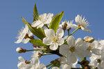 07 вишневый цвет