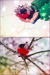 Шелободько Андрей (рук. Давыдова Ольга Александровна) - Зимняя птица