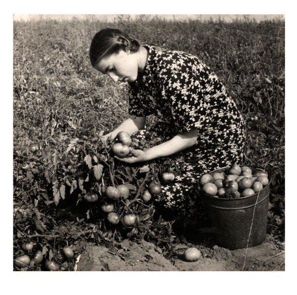 1954 село Подгорены.gif