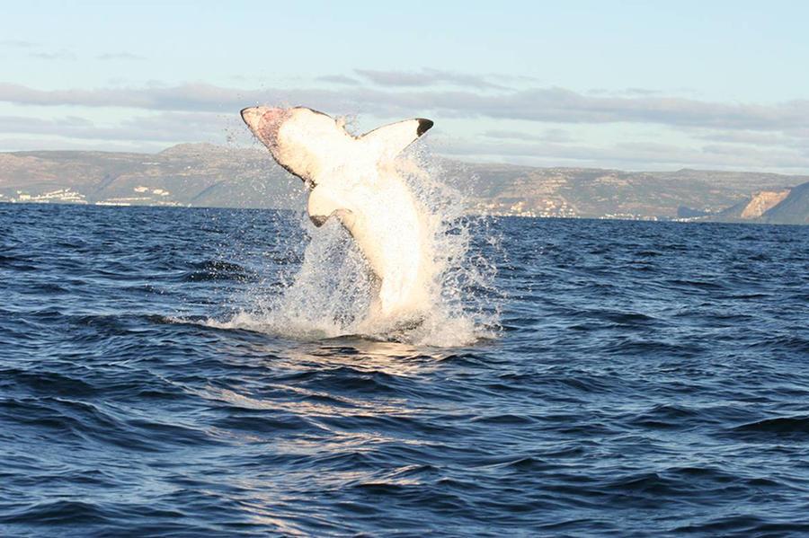 1. Рыбак из Южной Австралии по имени Арнольд Поинтер несколько лет назад освободил из сетей и тем са