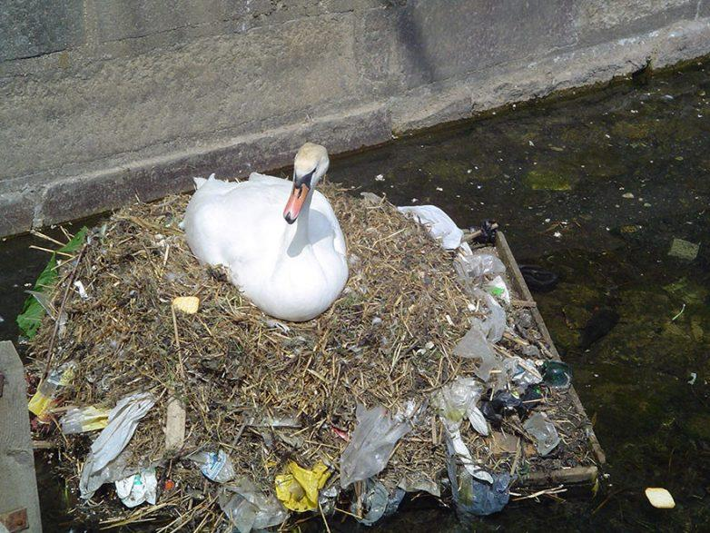 21. Гнездо из мусора