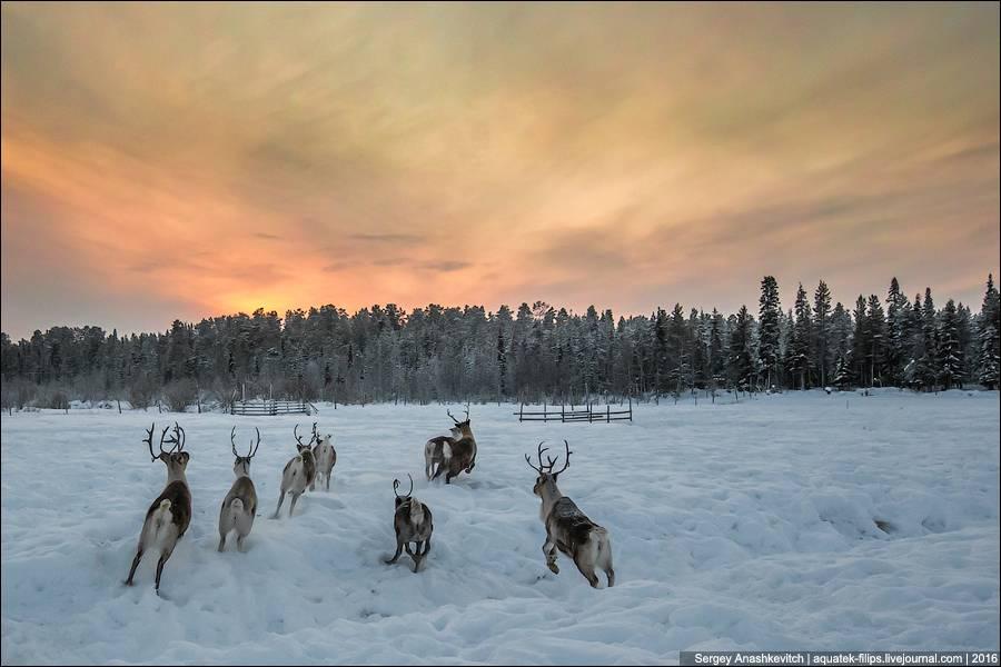 Эта школа находится за Полярным кругом в окрестностях финского городка Леви и называется Poroajokort