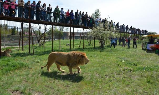 Вподсобке крымского парка львов отыскали мертвого мужчину