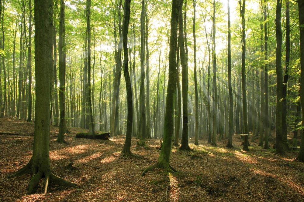 Деревья влияют наохлаждение Земли узнали ученые