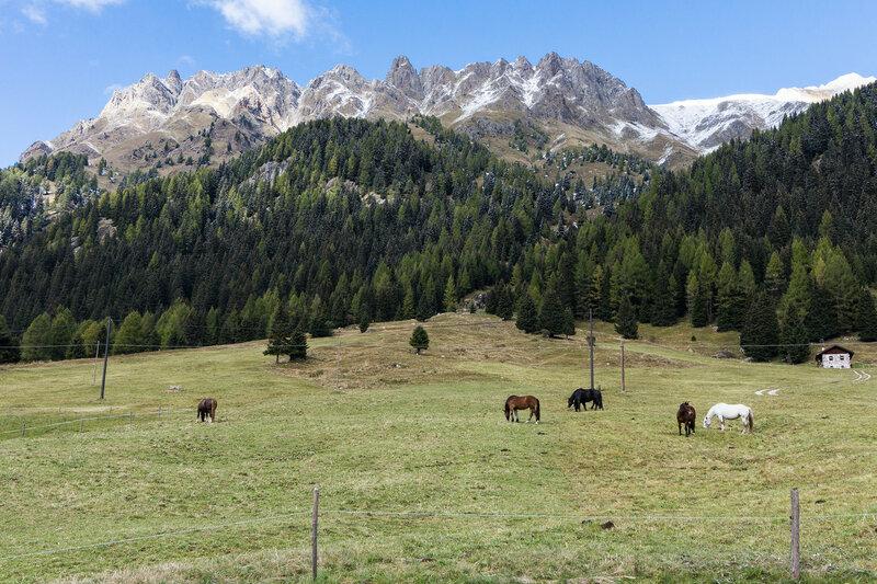 горы и лошади на перевале san pellegrino, альпы, италия