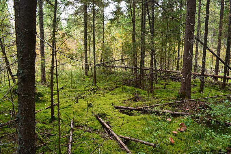 сказочный лес 16.jpg