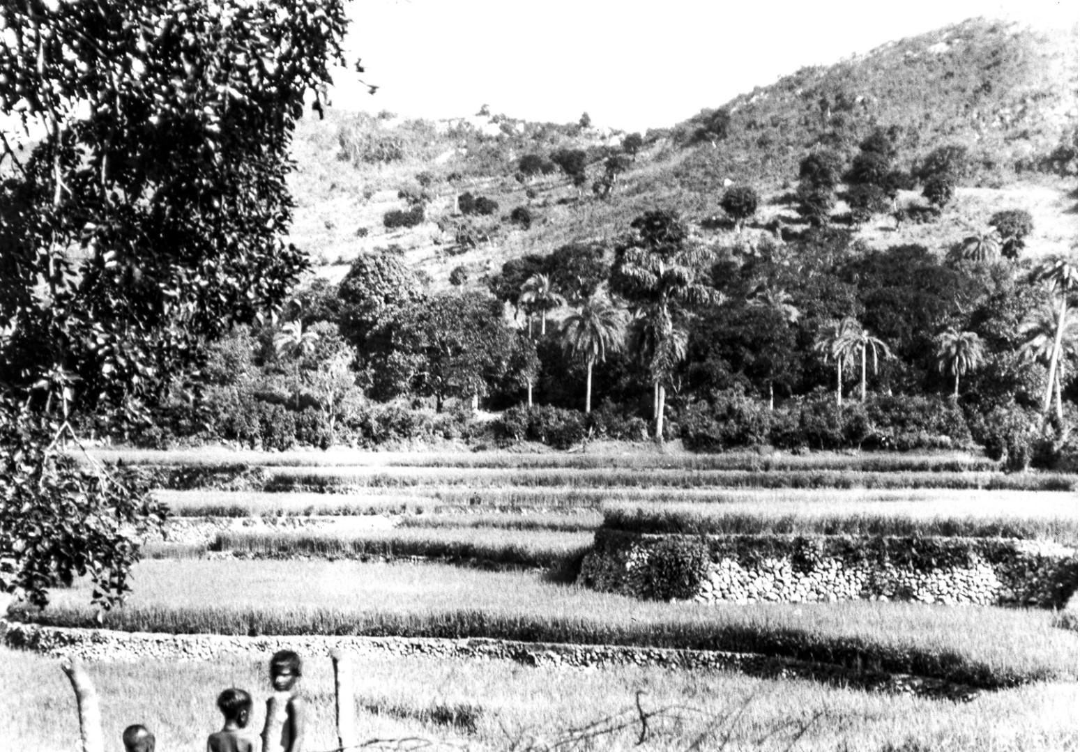 692. Орисса. Пейзаж с рисовыми полями на террасах