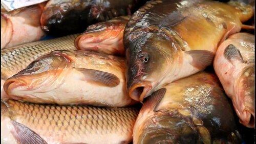 СМИ:у продавцов живой рыбой на рынках нет необходимых документов