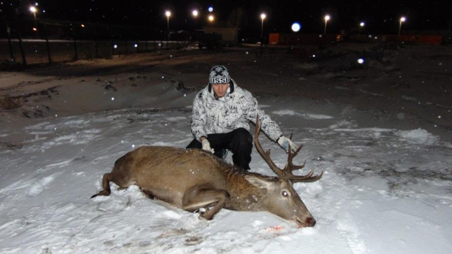 Работники  Воронежского заповедника словили  оленя, забежавшего назавод