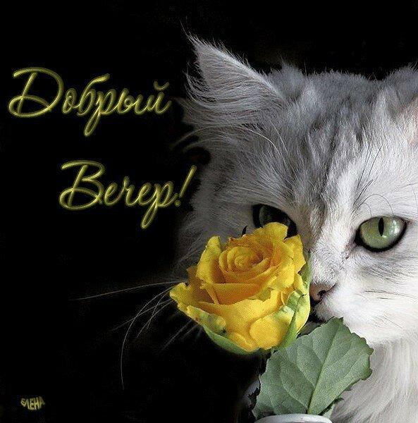 Красивые открытки с кошками для ватсапа, летие