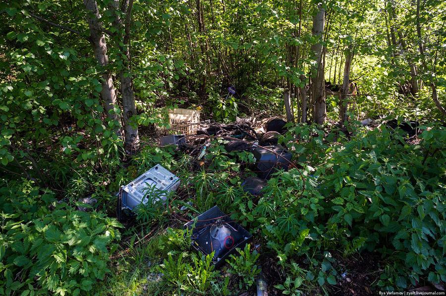 71. Лес завален мусором.