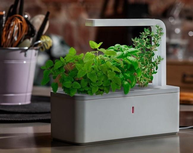 © Click & Grow  Говорят, скоро это новое изобретение будет радовать ценителей свежей зелени в