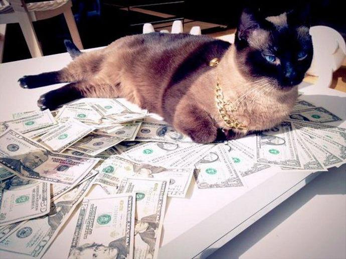 Коты-гангстеры (25 фото)