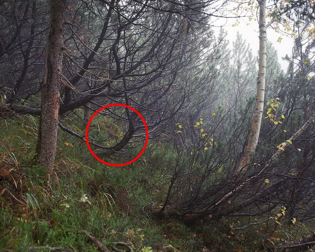Найдите снайпера на фотографии
