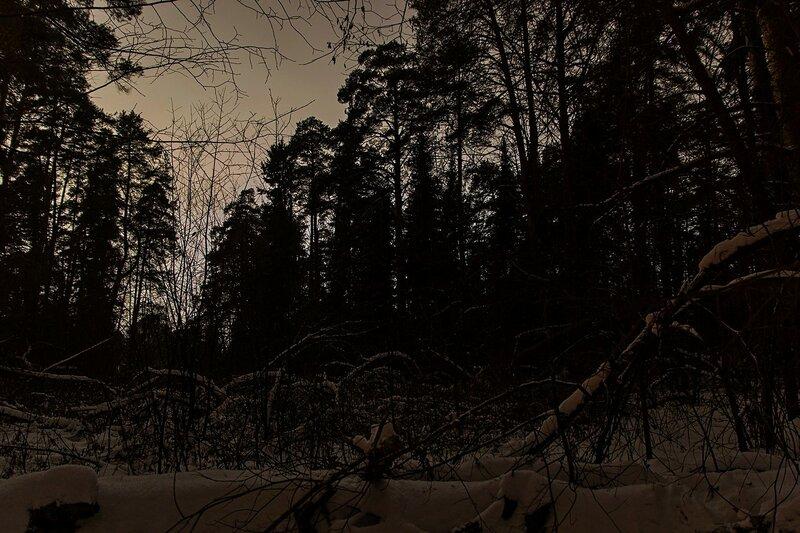 Зимний лес ночью: серое небо, тёмные силуэты сосен и непролазный бурелом