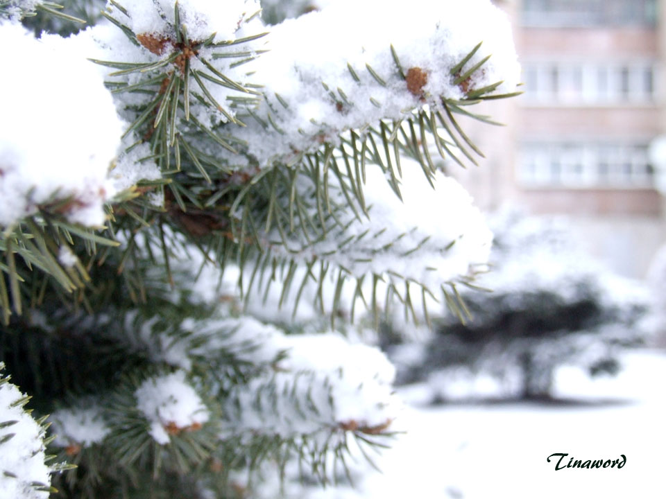 Вот-и-снег-1.jpg