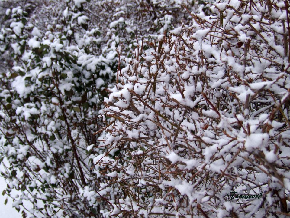 Вот-и-снег-9.jpg