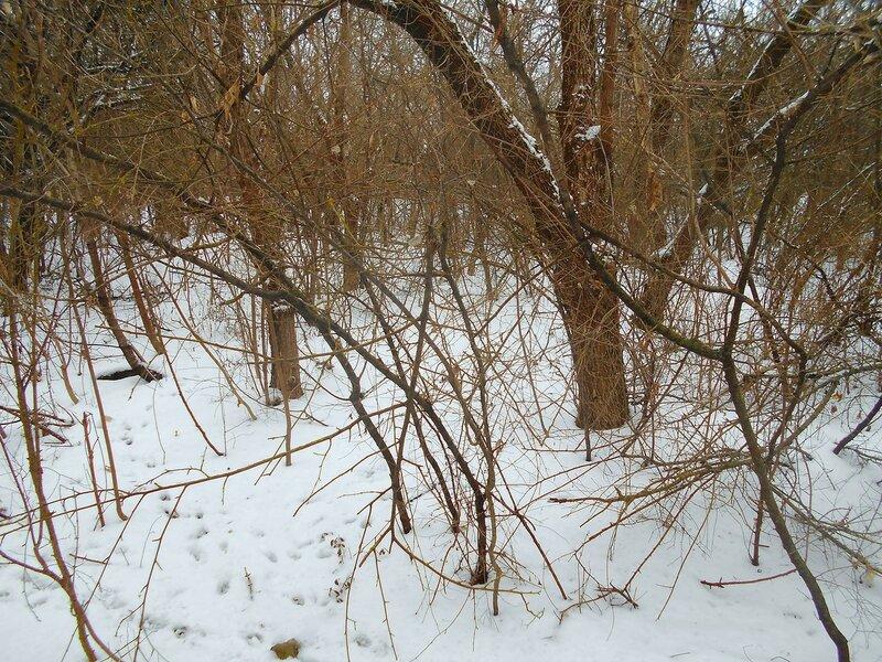 На снегах пушистых виден след звериный ... DSCN0881.JPG