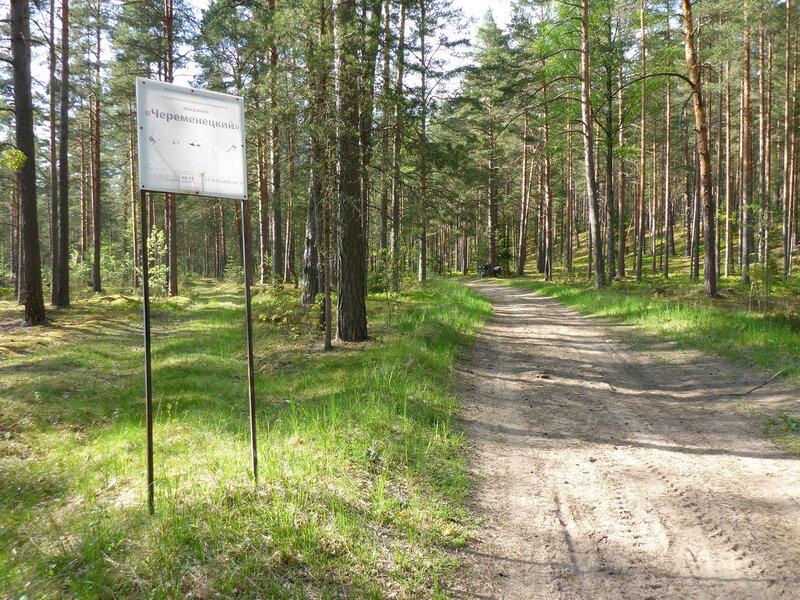 песчаная дорога и сосновый бор в заказнике череменецкий