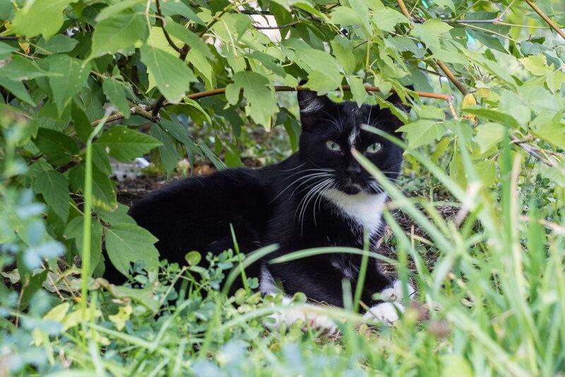 черно белая кошка лежит в траве