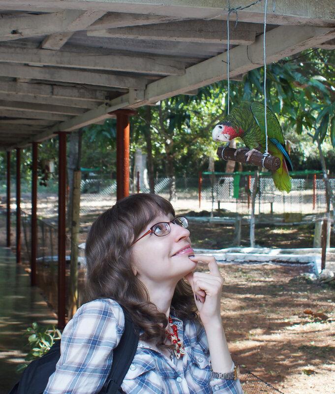 Кубинский амазон (Amazona leucocephala)