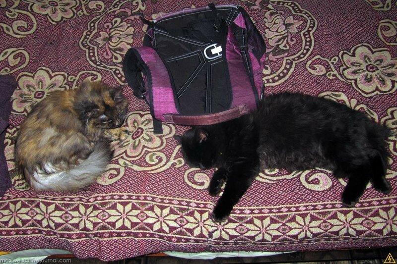 Кицька і новий кіт
