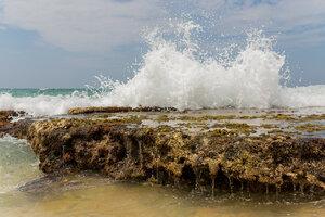 Кораллы Индийского океана