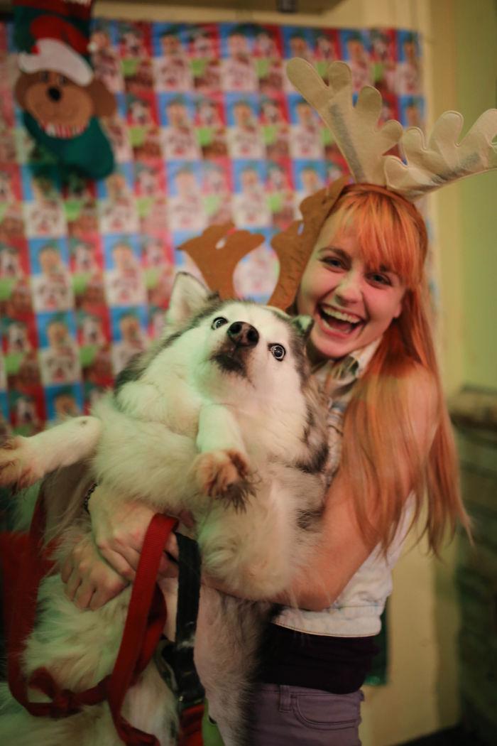 Хозяйка просто хотела сделать милое новогоднее фото со своим псом.