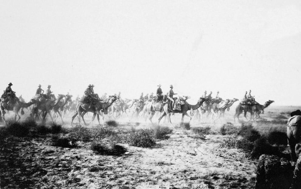 Солдат и его лошадь в противогазах, 1918 год. (Фото Woodrow Wilson Presidential Library):