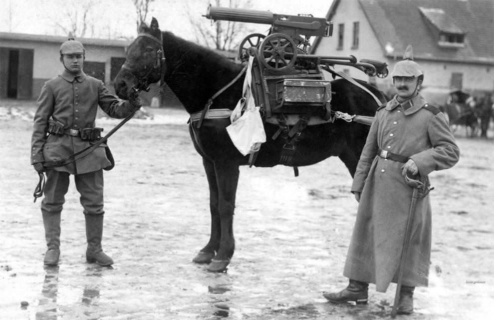Это животные на войне. (Фото National Archives | Official German Photograph).  Также смотрит