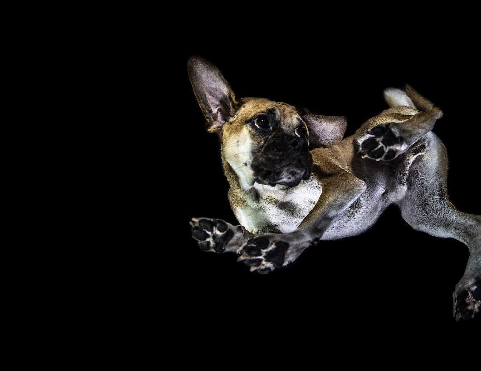 5. Пудель. (Фото The Underdogs Project):