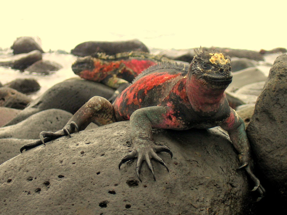 В 1986 году Галапагосы были объявлены Национальным природным парком. Остров Фернандина — самый
