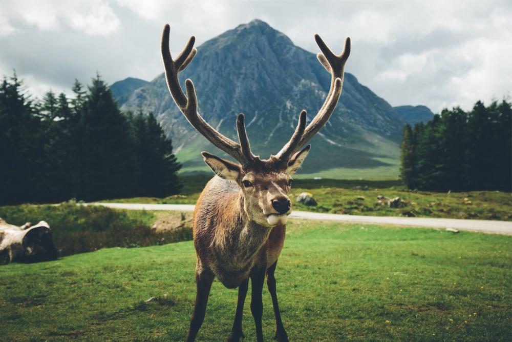© Daniel Casson/REX/Shutterstock  «Царь горы». Живописная горная долина Гленко вШотландии.